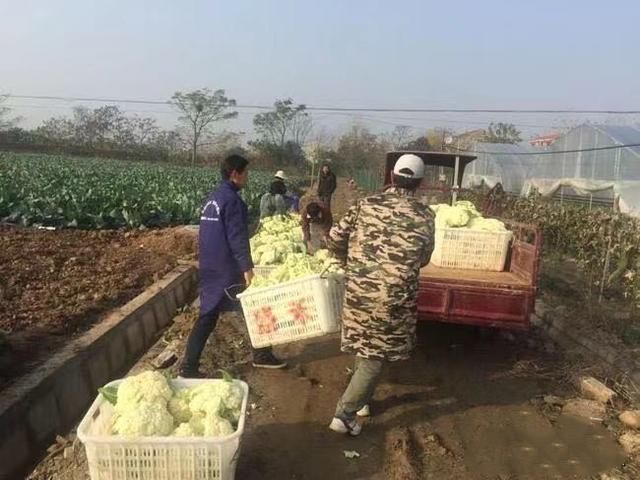 《信用中国》抗疫中的企业力量:盛禾生态农业为抗疫一线捐赠新鲜蔬菜