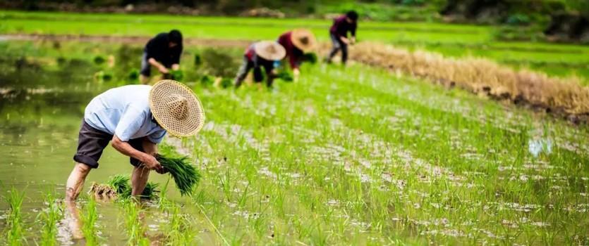 六部门:引导市场化征信机构提供高质量涉农征信服务