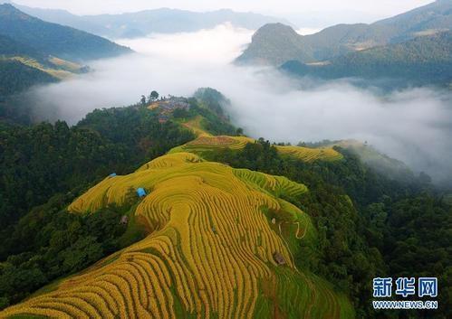 """从脆弱生态到满眼皆""""绿""""——国家生态文明试验区贵州的""""绿色之路"""""""