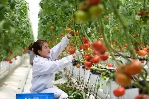 农业农村部:标本兼治打击种业侵权违法行为