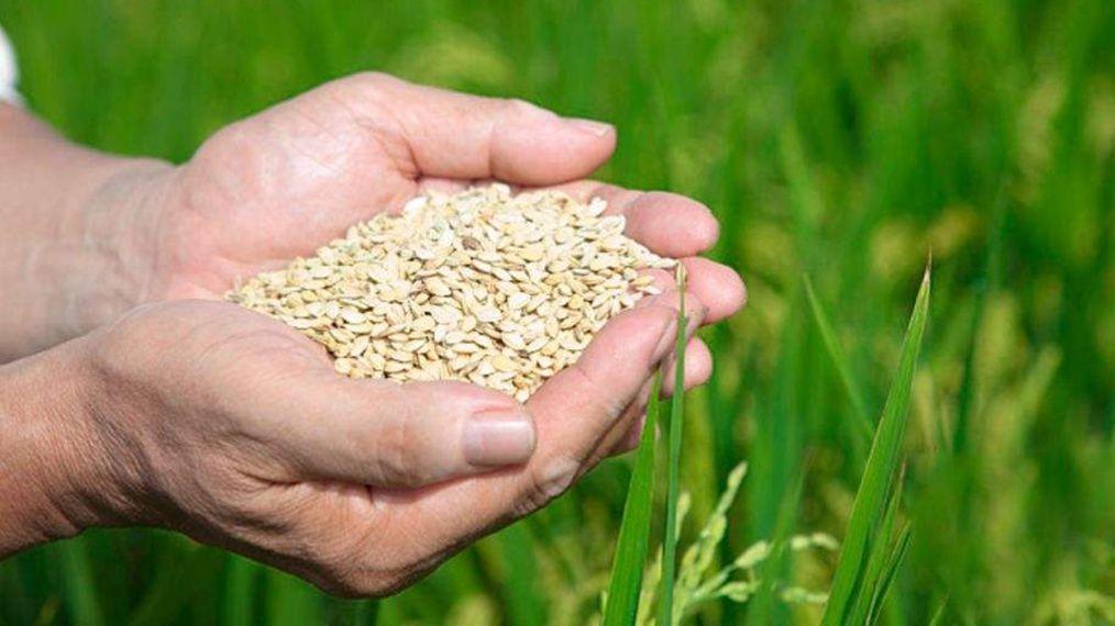 全球还有6.9亿人在挨饿!大家该如何端牢饭碗?